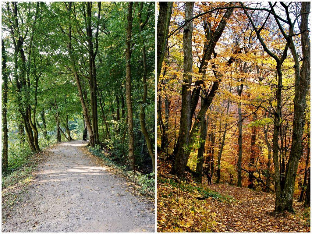 jeseň, lístie, stromy